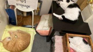 保護猫活動を支援する
